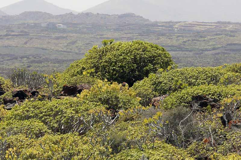 Lanzarote Reisebericht Bild-12