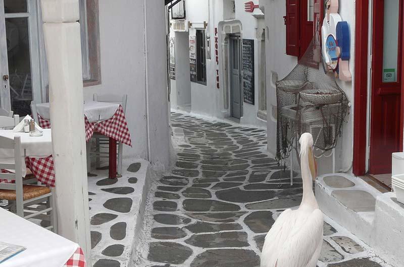 Kreuzfahrt Mykonos Malta Foto 09