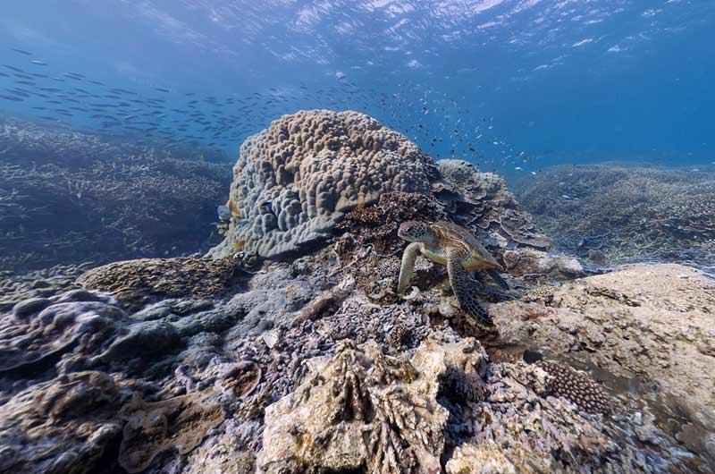 Google Seaview Bilder-14