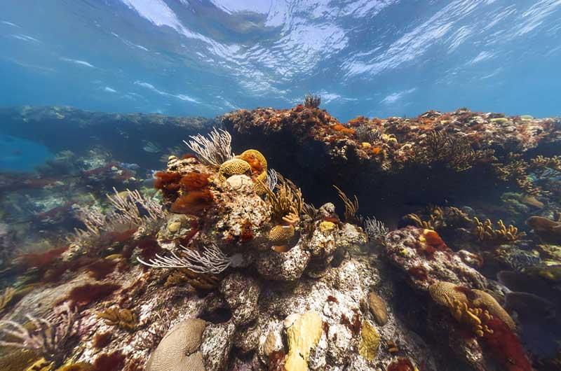 Google Seaview Bilder-17