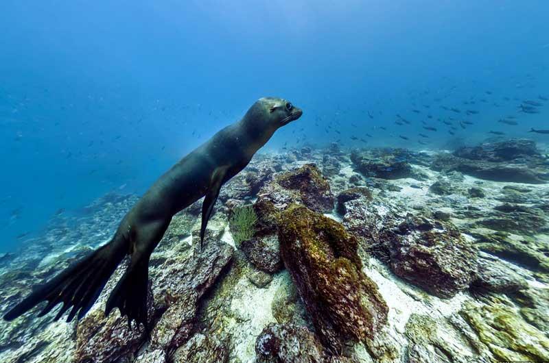 Google Seaview Bilder-18